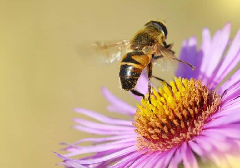 Pszczoła Musi być - na kwiatku